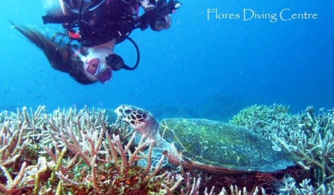 diver with hawksbill turtle