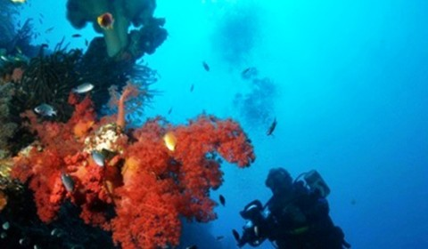 red soft coral with photographer
